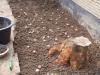 Garten: erste Zwiebeln gesät
